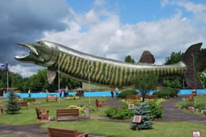 full-fish